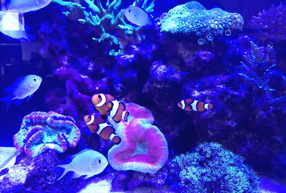 サンゴ水槽 スポットメンテナンス 生体画像