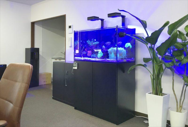 オフィス事務所 サンゴ水槽 スポットメンテナンス 水槽画像1