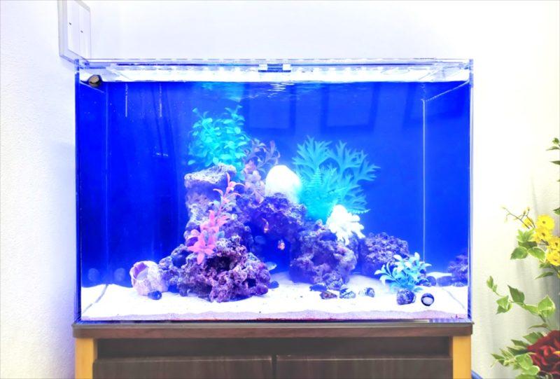 台東区 オフィス 60cm海水魚水槽 設置事例 水槽画像3