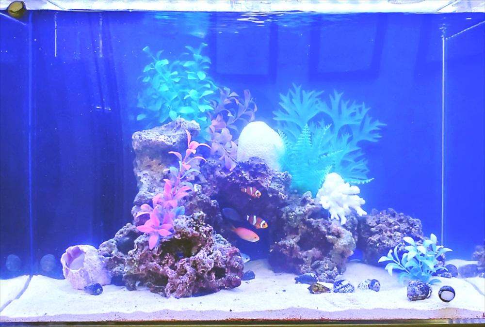 オフィスのエントランス 60cm海水魚水槽 生体画像