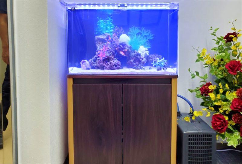 台東区 オフィス 60cm海水魚水槽 設置事例 水槽画像2