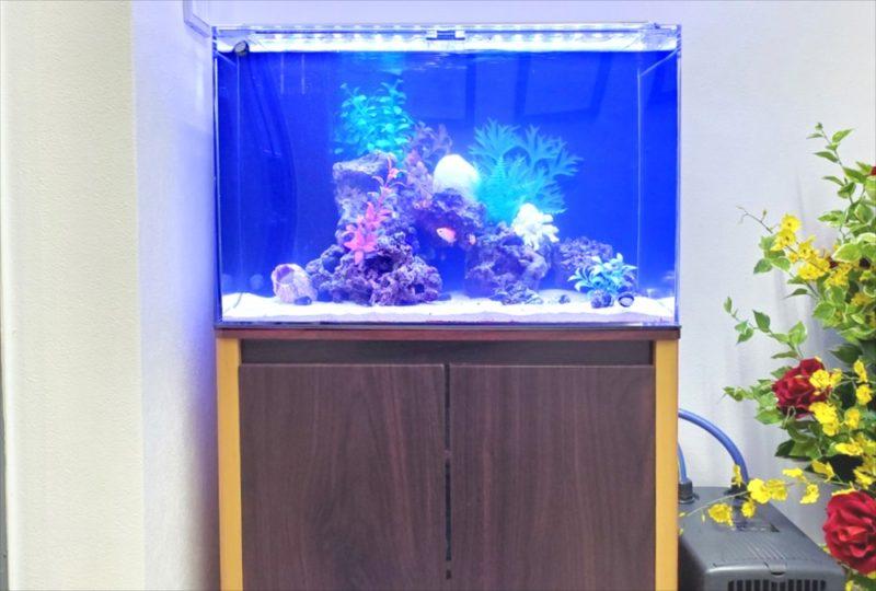 台東区 オフィス 60cm海水魚水槽 設置事例 水槽画像5