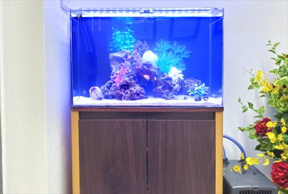 オフィスのエントランス 60cm海水魚水槽 正面アップ画像