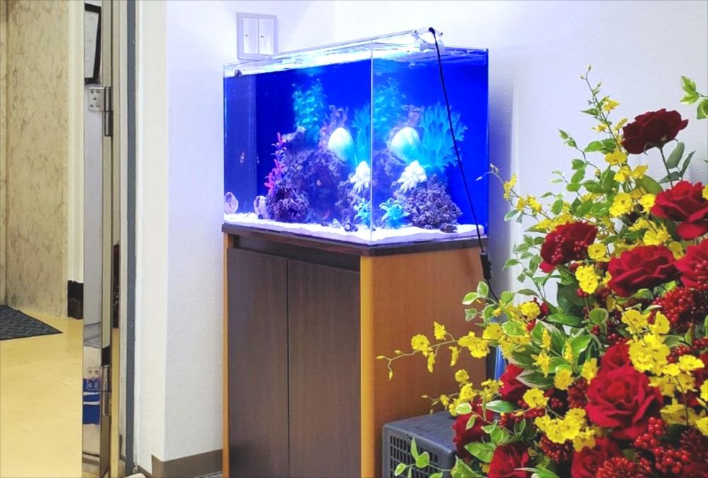 オフィスのエントランス 60cm海水魚水槽 斜め画像