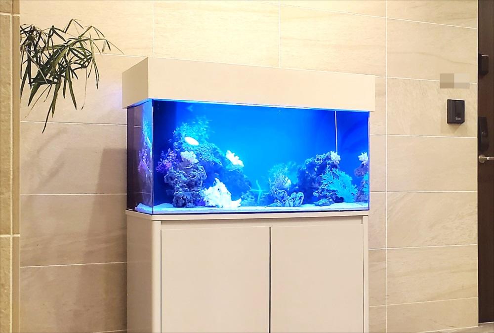 マンション エントランス 90cm海水魚水槽 斜めアップ画像