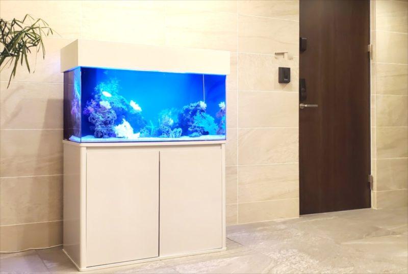 マンションのエントランス 90cm海水魚水槽 設置事例 水槽画像1