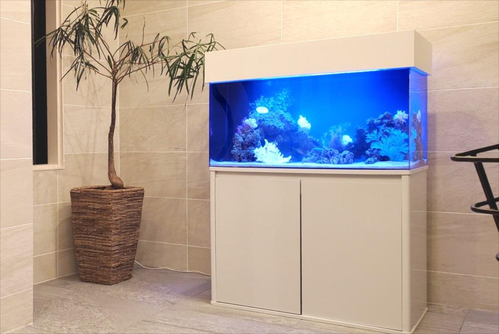 マンション エントランス 90cm海水魚水槽 斜め画像