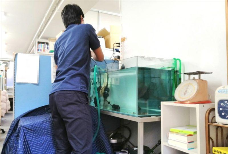 文京区 オフィス 亀水槽 メンテナンス事例 水槽画像5