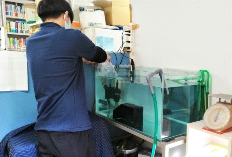 文京区 オフィス 亀水槽 メンテナンス事例 水槽画像2