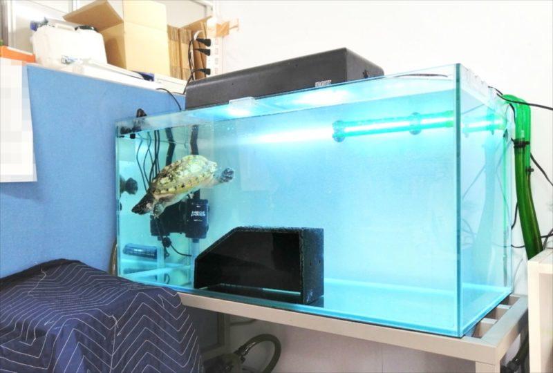 文京区 オフィス 亀水槽 メンテナンス事例 水槽画像3