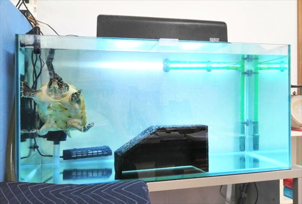オフィス事務所 90cm亀水槽 全体画像