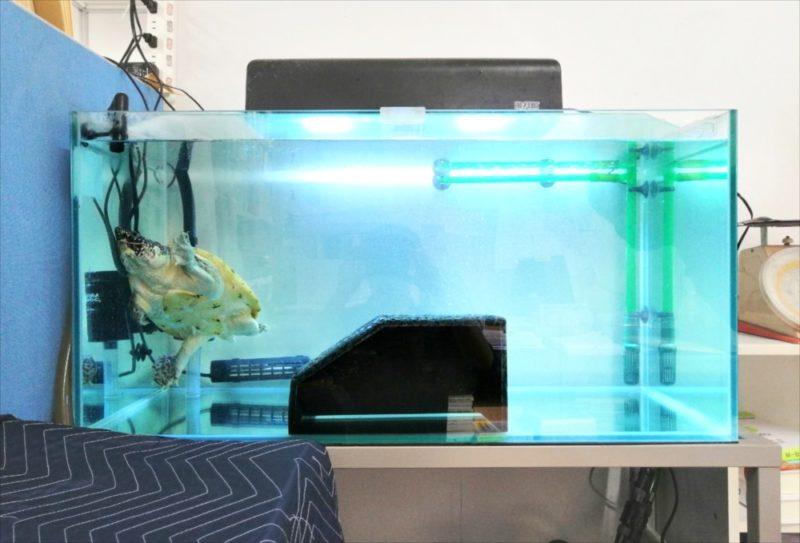 文京区 オフィス 亀水槽 メンテナンス事例 水槽画像1