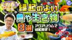 YouTube更新「【迎春特番】縁起のよい魚や生き物8選!おめでたい魚で正月を彩ろう!」