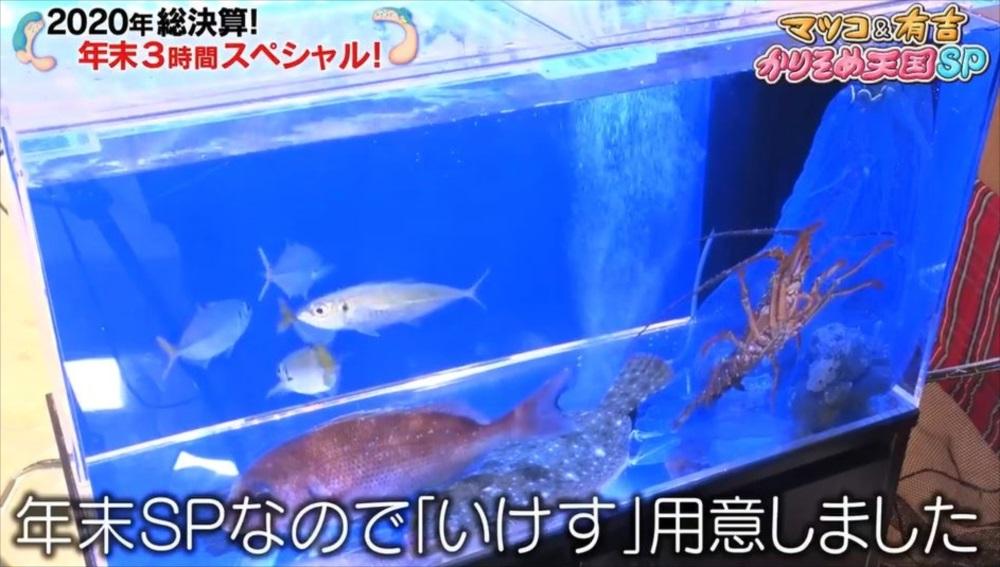 テレビ番組 撮影 活魚水槽 画像2