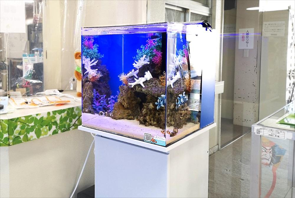 老人福祉センター エントランス 海水魚水槽 斜め全体画像