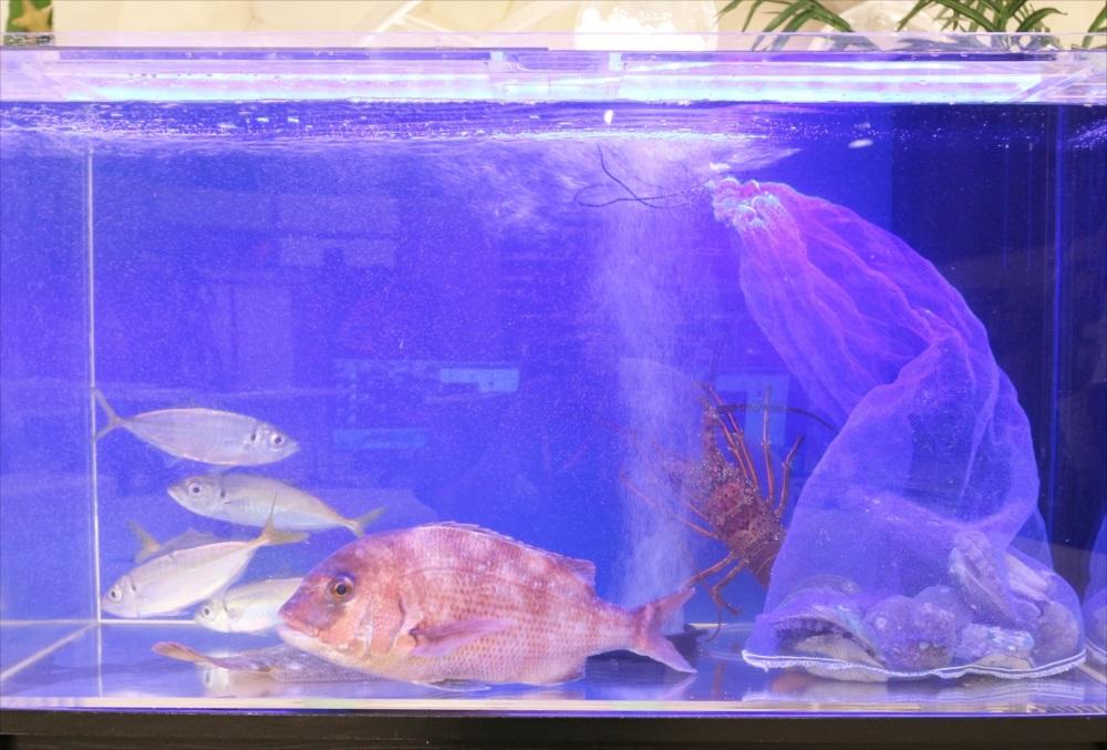 テレビ番組 撮影 活魚水槽 生体画像