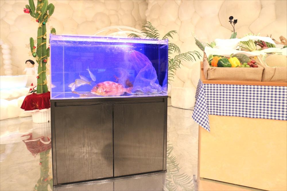 テレビ番組 撮影 活魚水槽 全体画像