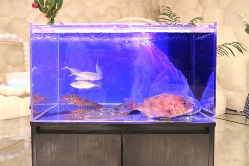 テレビ朝日『マツコ&有吉 かりそめ天国SP』活魚水槽を短期レンタル 水槽画像4
