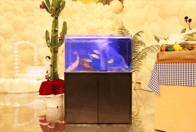 テレビ朝日『マツコ&有吉 かりそめ天国SP』活魚水槽を短期レンタル 水槽画像1