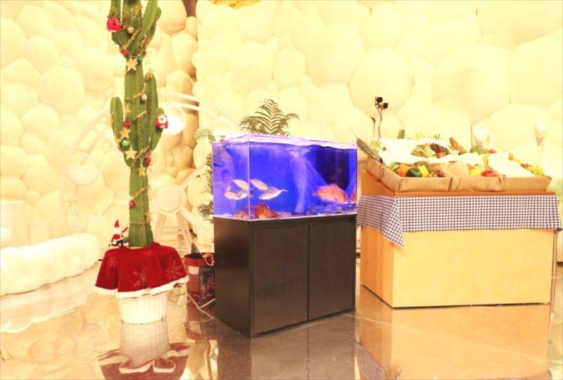 テレビ朝日『マツコ&有吉 かりそめ天国SP』活魚水槽を短期レンタル 水槽画像2