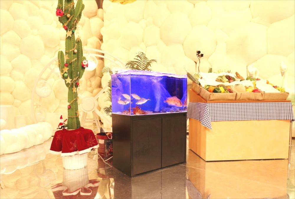 テレビ番組 撮影 活魚水槽 画像1
