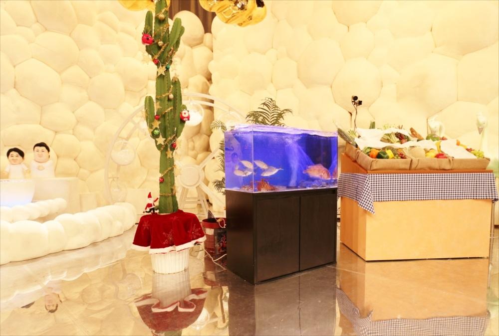 テレビ番組 撮影 活魚水槽 画像7