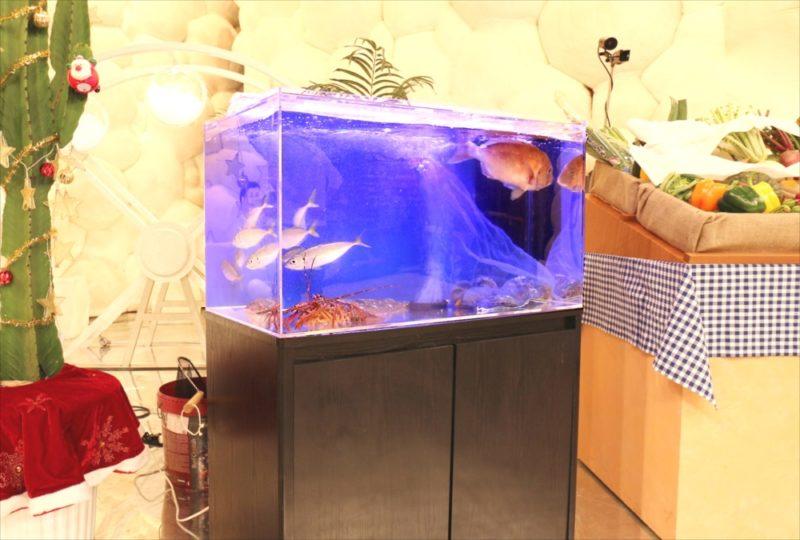 テレビ朝日『マツコ&有吉 かりそめ天国SP』活魚水槽を短期レンタル 水槽画像5