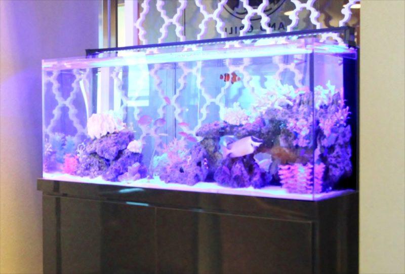 シャングリ・ラ ホテル 東京 様 水槽短期レンタル 水槽画像3