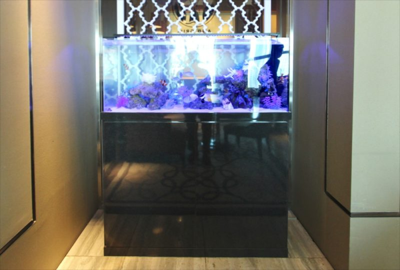 シャングリ・ラ ホテル 東京 様 水槽短期レンタル 水槽画像2