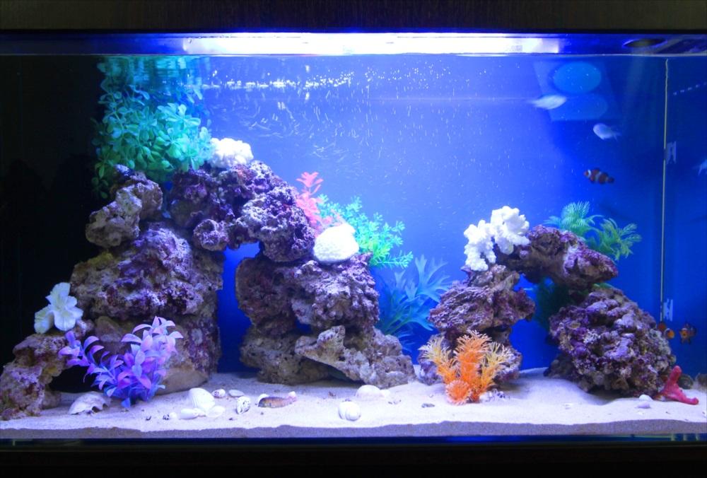 オフィス事務所 90cm海水魚水槽 生体画像