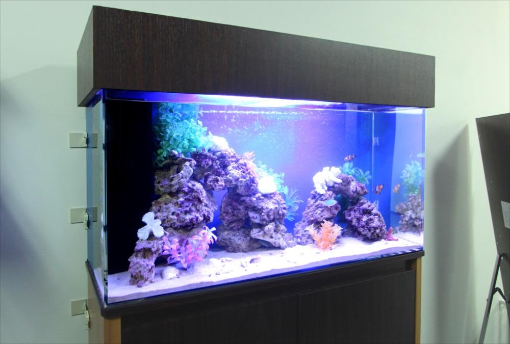 オフィス事務所 90cm海水魚水槽 斜めアップ画像