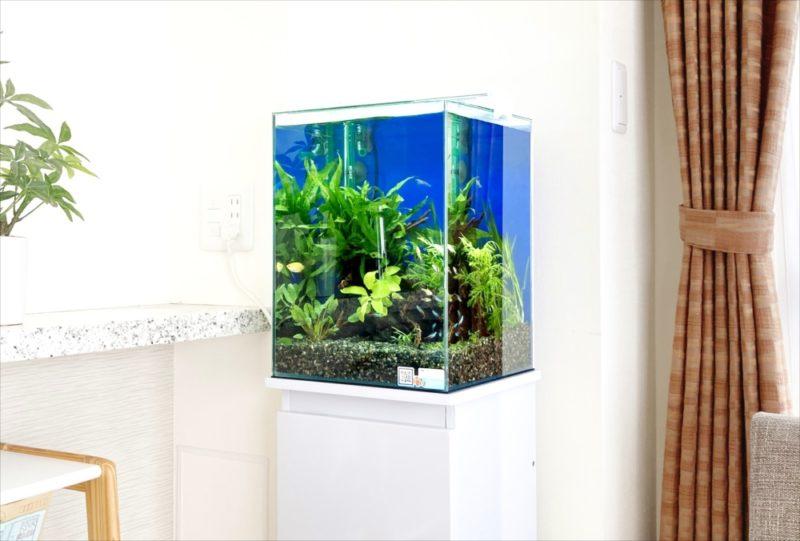 2週間お試し水槽キャンペーン!30cm淡水魚水槽 レンタル事例 水槽画像2