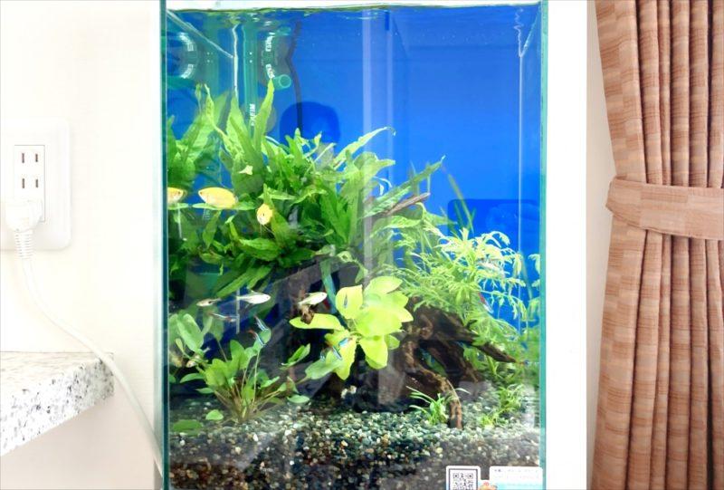 2週間お試し水槽キャンペーン!30cm淡水魚水槽 レンタル事例 水槽画像3