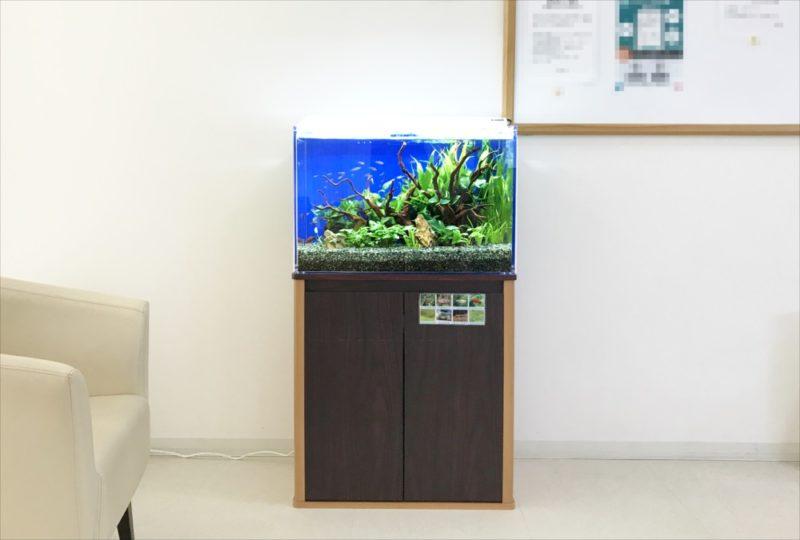 メディカルクリニックの待合室 60cm淡水魚水槽 設置事例 水槽画像4