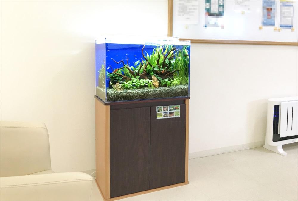 メディカルクリニックの待合室 60cm淡水魚水槽 設置事例