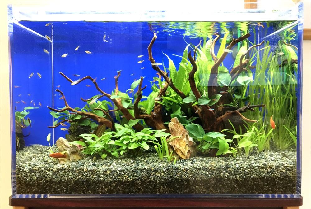 メディカルクリニック 60cm淡水魚水槽 正面アップ画像