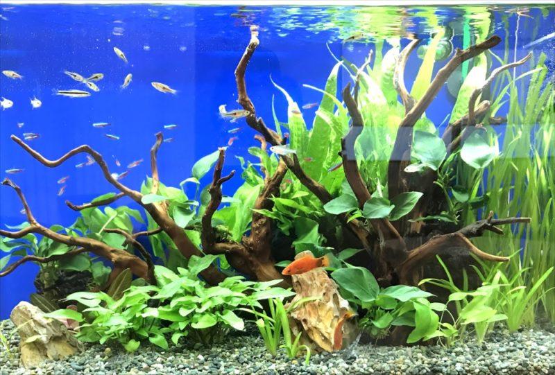 メディカルクリニックの待合室 60cm淡水魚水槽 設置事例 水槽画像5