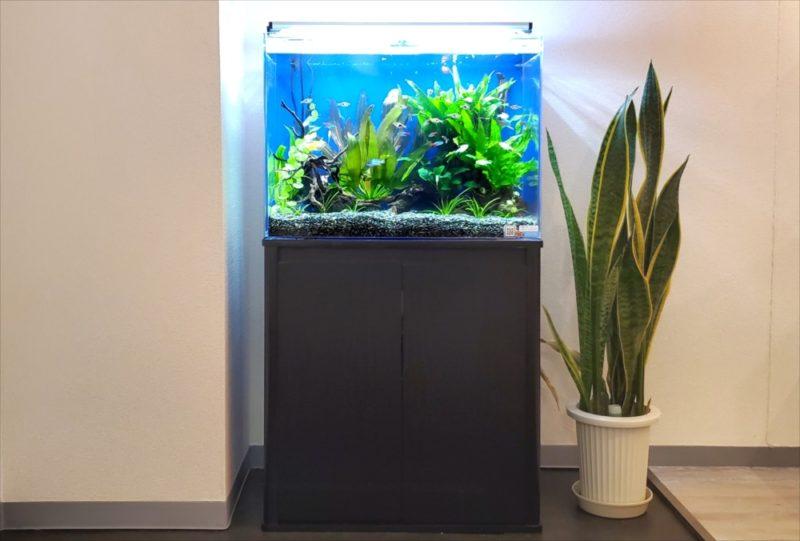 新宿区 オフィスのエントランス 60cm淡水魚水槽事例 水槽画像1