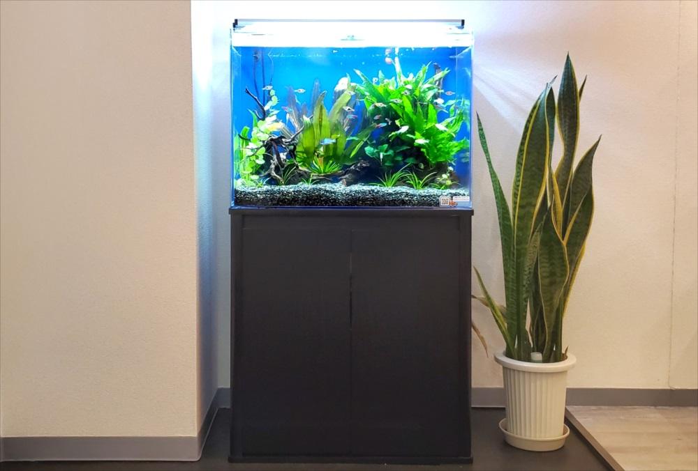 新宿区 オフィスのエントランス 60cm淡水魚水槽事例