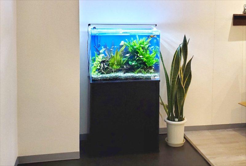 新宿区 オフィスのエントランス 60cm淡水魚水槽事例 水槽画像5