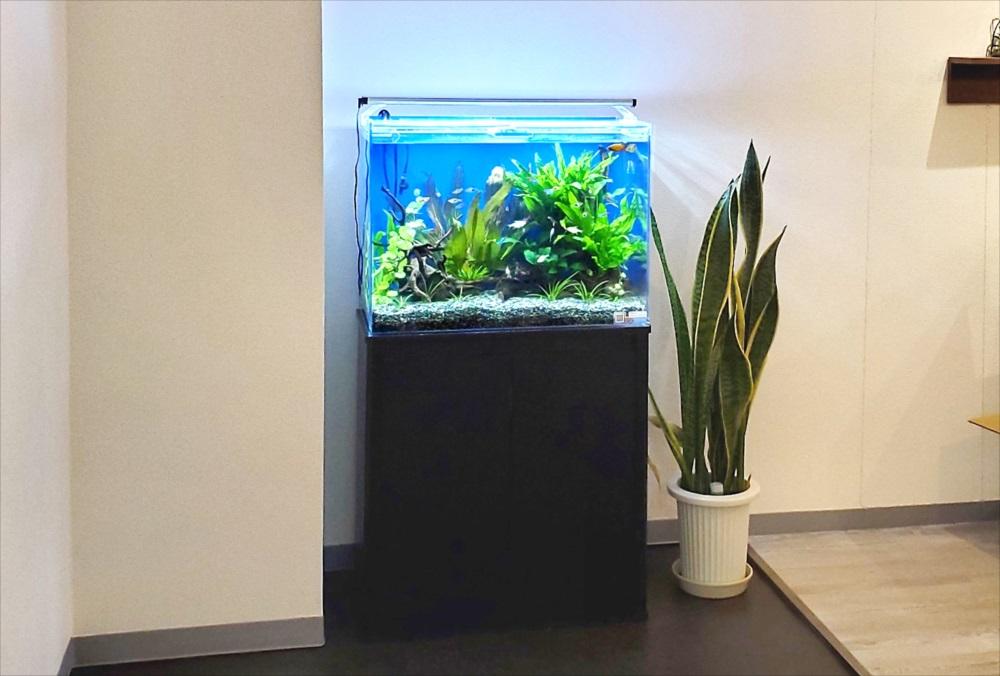 オフィスのエントランス 60cm淡水魚水槽 正面画像