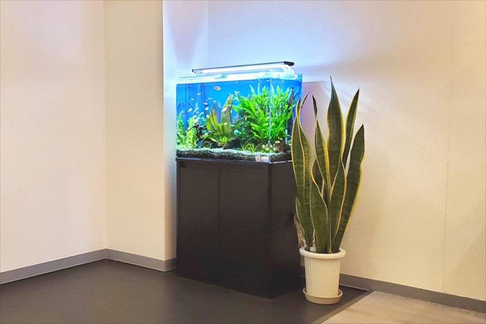 オフィスのエントランス 60cm淡水魚水槽 斜め全体画像
