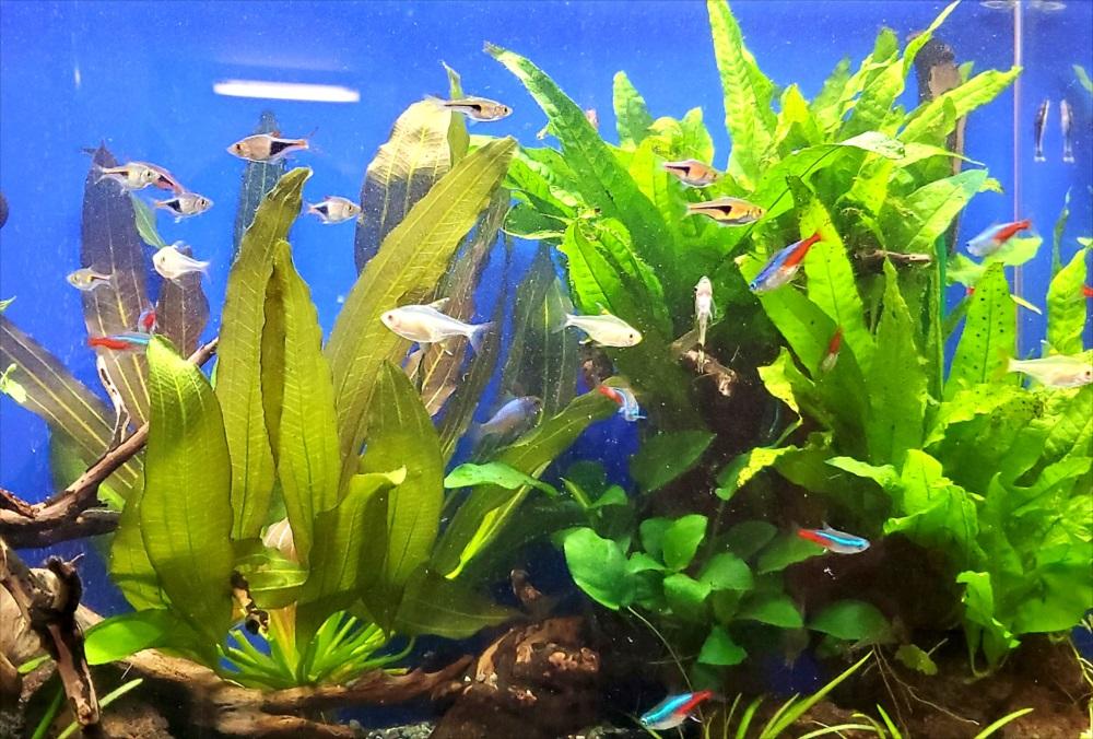 オフィスのエントランス 60cm淡水魚水槽 水草画像
