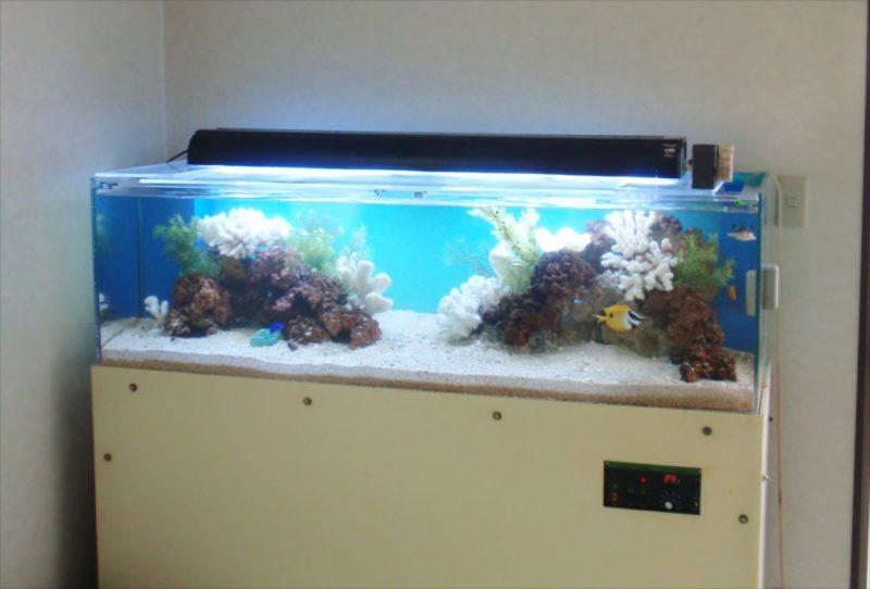三和レンタル様に150cmサンゴ水槽を設置 水槽画像1