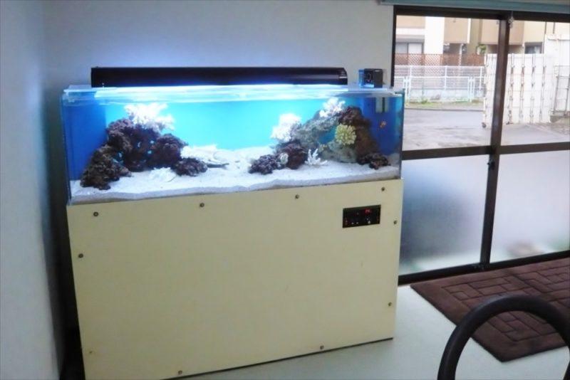 三和レンタル様に150cmサンゴ水槽を設置 水槽画像2