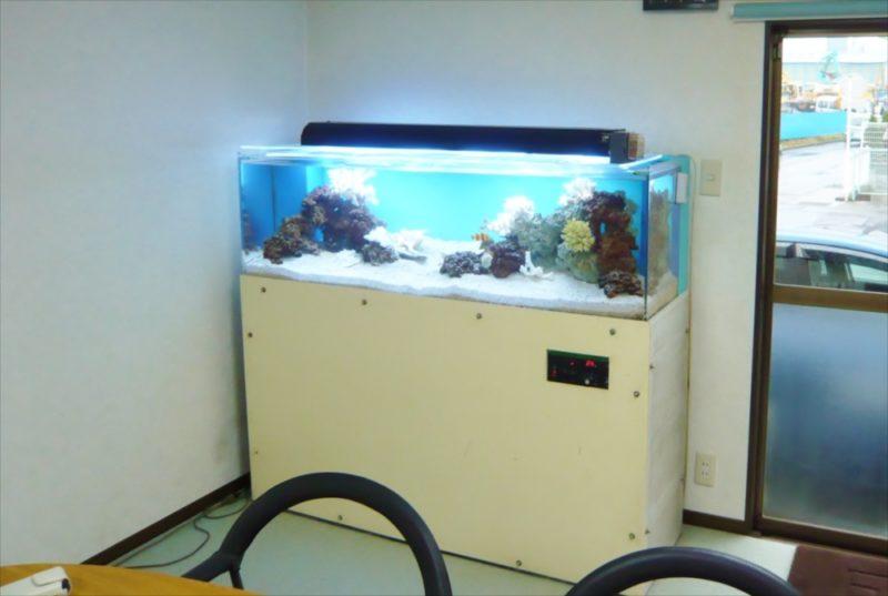 三和レンタル様に150cmサンゴ水槽を設置 水槽画像4