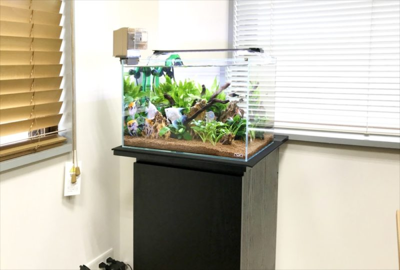 りんくう電設株式会社様 45cm淡水魚水槽 メンテナンス事例 水槽画像1
