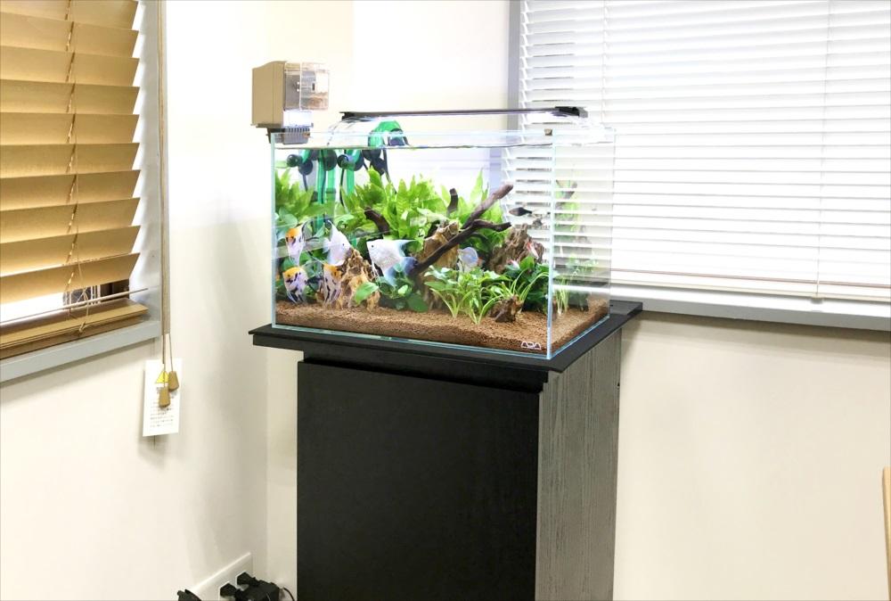 りんくう電設株式会社様 45cm淡水魚水槽 メンテナンス事例 メイン画像