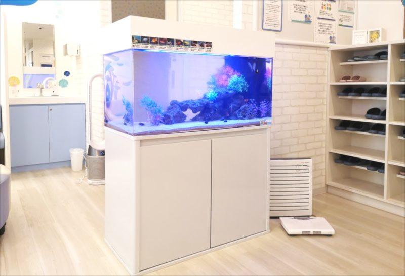 二俣川こどもクリニック様 90cm海水魚水槽事例 水槽画像1