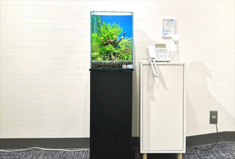 オフィスの受付ロビー お試し水槽設置事例 水槽画像1